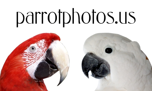 BabyCam on parrotphotos.us